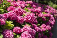 H�tel Royal - Fleurs